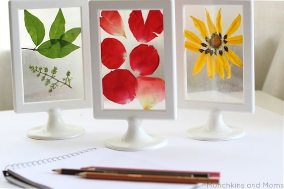 What a cool way to display pressed flowers and leaves! From munchkinsandmoms .